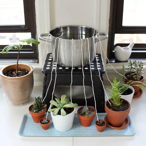 auto-irrigação regar plantas