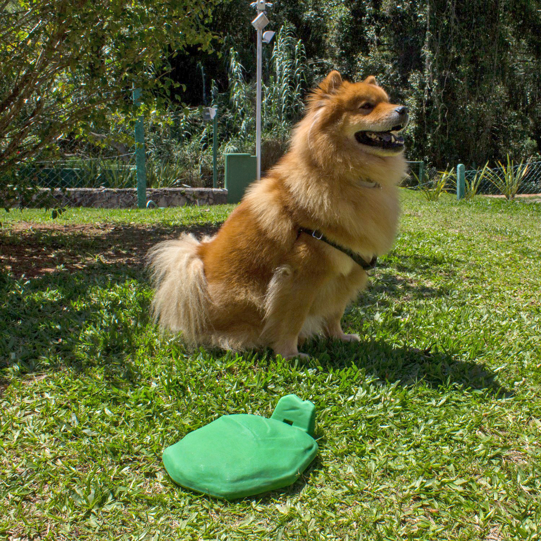 usare life biodog biodigestor fezes cachorro